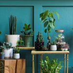 5x planten om je studentenkamer mee op te fleuren | Deze moet je hebben!